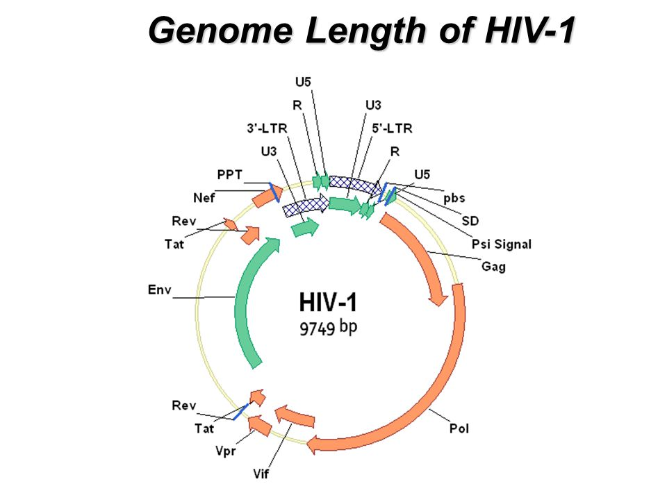 Genome Length of HIV-1