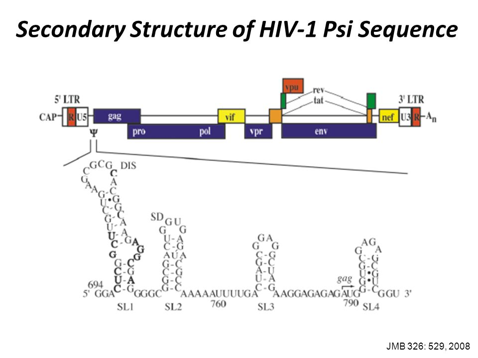 Secondary Structure of HIV-1 Psi Sequence JMB 326: 529, 2008