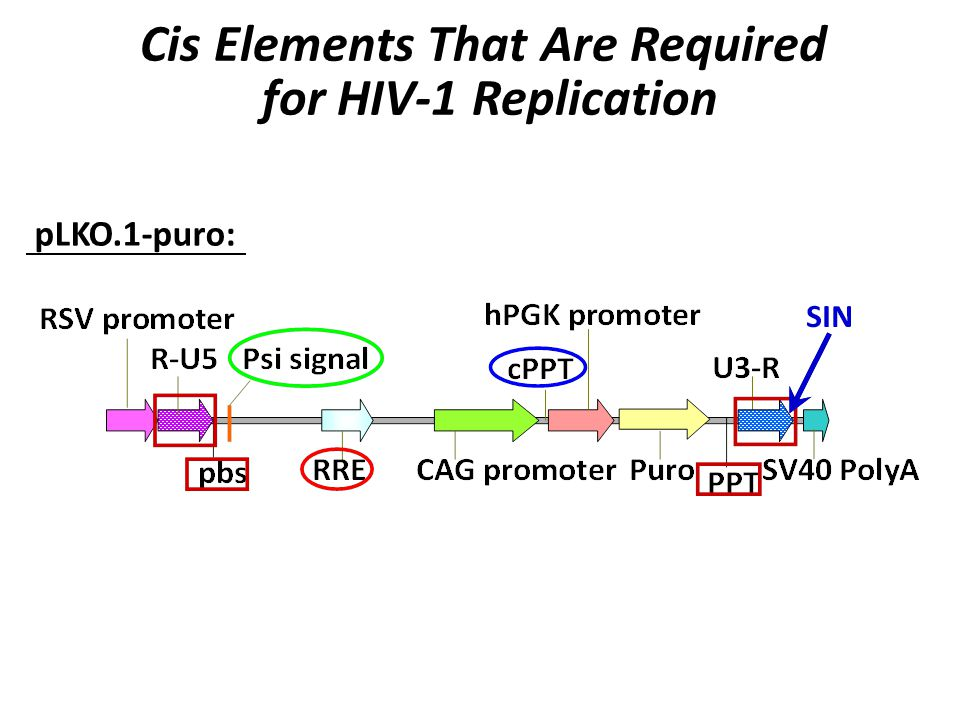 pLKO.1-puro: Cis Elements That Are Required for HIV-1 Replication