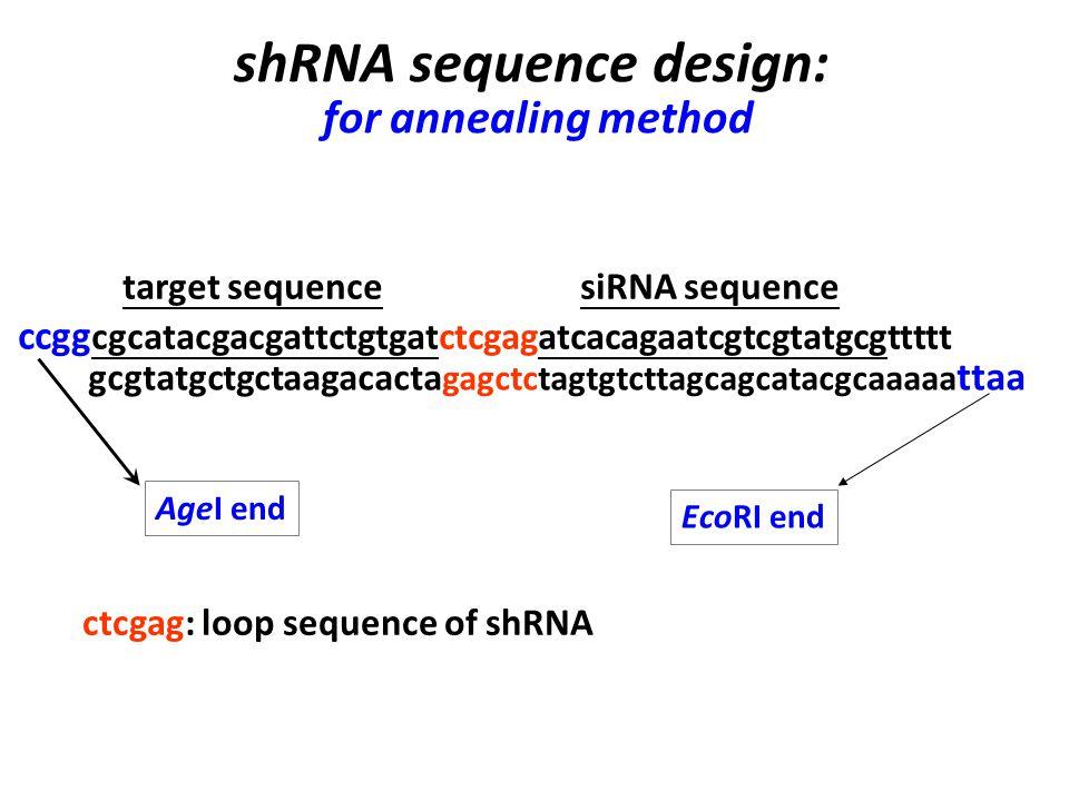 target sequence siRNA sequence ccgg cgcatacgacgattctgtgatctcgagatcacagaatcgtcgtatgcgttttt ctcgag: loop sequence of shRNA gcgtatgctgctaagacacta gagctctagtgtcttagcagcatacgcaaaaa ttaa shRNA sequence design: for annealing method AgeI end EcoRI end