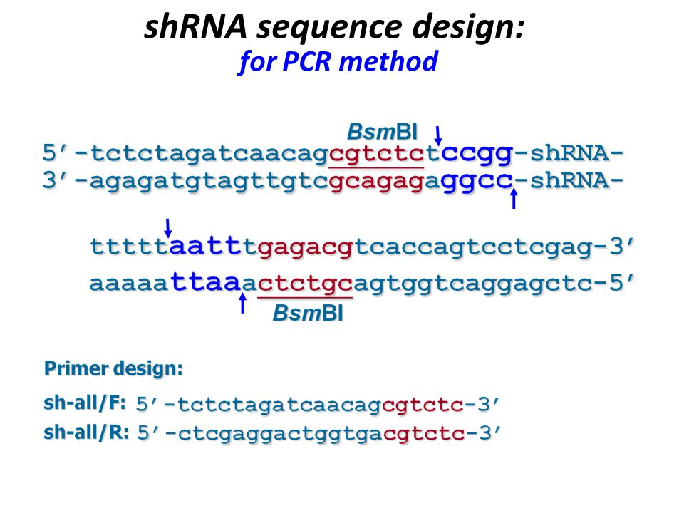 shRNA sequence design: for PCR method