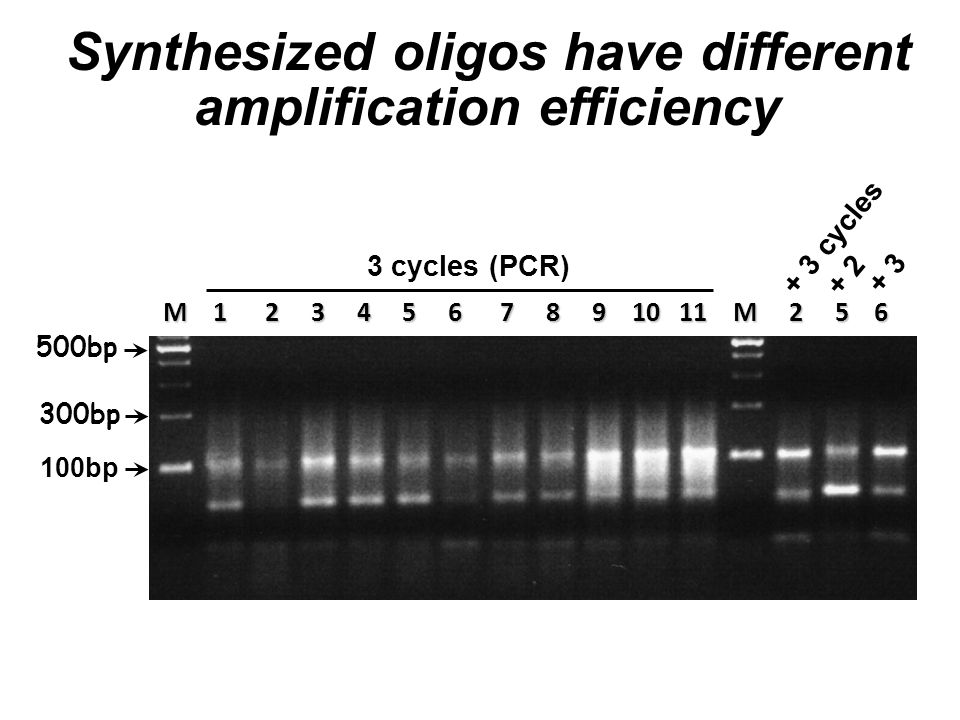500bp 300bp 100bp M 1 2 3 4 5 6 7 8 9 10 11 M 2 5 6 3 cycles (PCR) + 3 cycles + 2 + 3 Synthesized oligos have different amplification efficiency