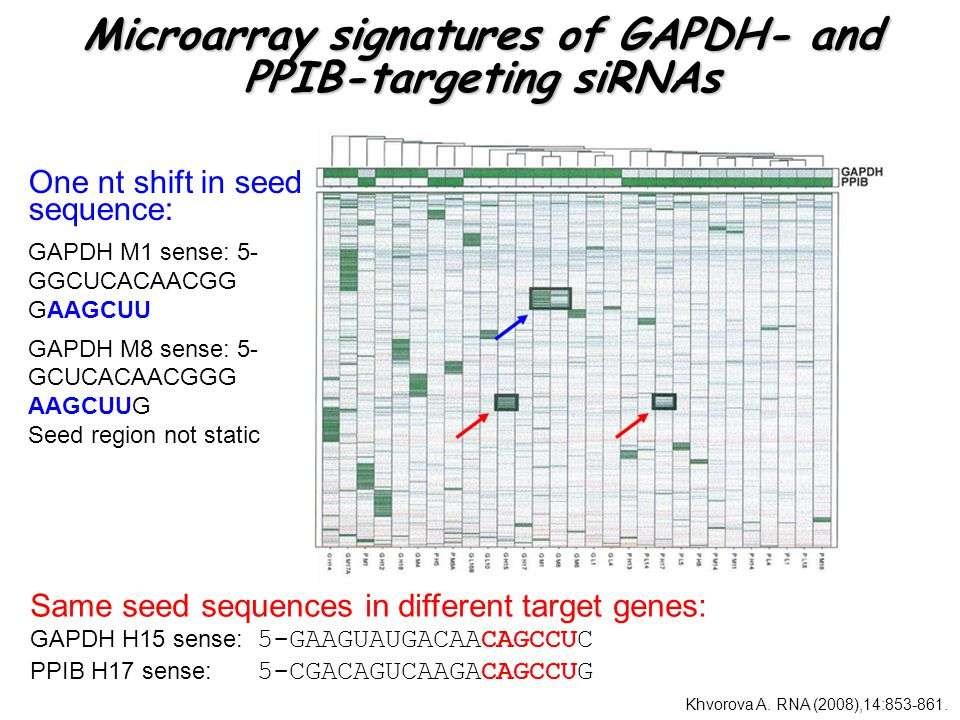 Microarray signatures of GAPDH- and PPIB-targeting siRNAs Same seed sequences in different target genes: GAPDH H15 sense: 5-GAAGUAUGACAACAGCCUC PPIB H