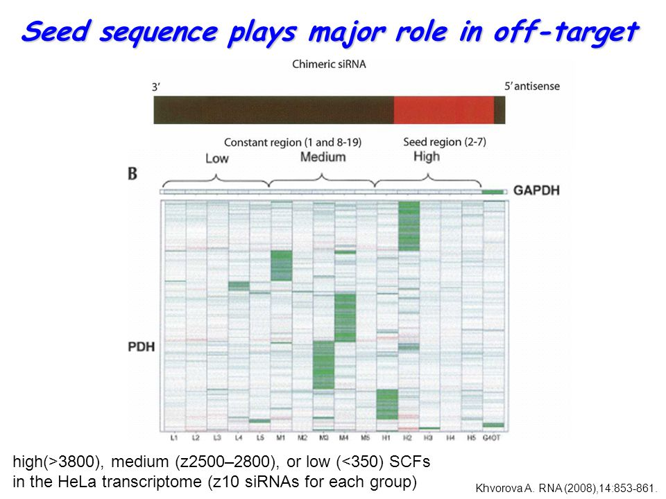 Seed sequence plays major role in off-target GAPDH high(>3800), medium (z2500–2800), or low (<350) SCFs in the HeLa transcriptome (z10 siRNAs for each group) Khvorova A.