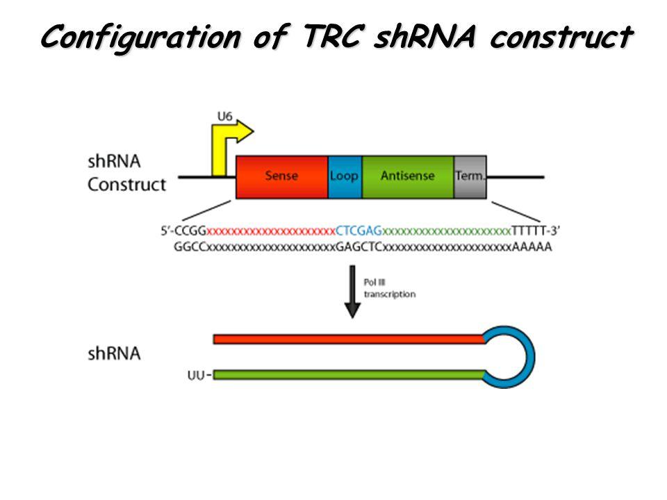 Configuration of TRC shRNA construct