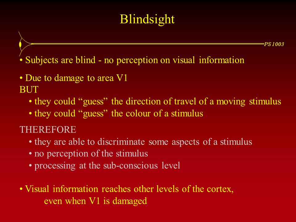 PS 1003 Blindsight Subjects are blind - no perception on visual information Due to damage to area V1 BUT they could guess the direction of travel of a moving stimulus they could guess the colour of a stimulus THEREFORE they are able to discriminate some aspects of a stimulus no perception of the stimulus processing at the sub-conscious level Visual information reaches other levels of the cortex, even when V1 is damaged