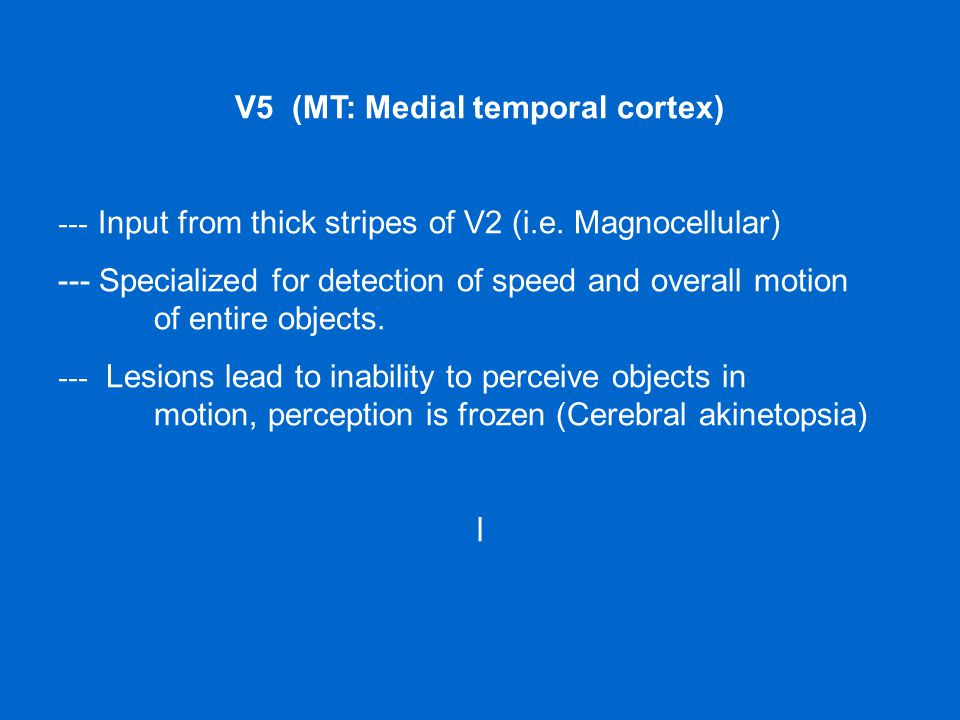 V5 (MT: Medial temporal cortex) --- Input from thick stripes of V2 (i.e. Magnocellular) --- Specialized for detection of speed and overall motion of e