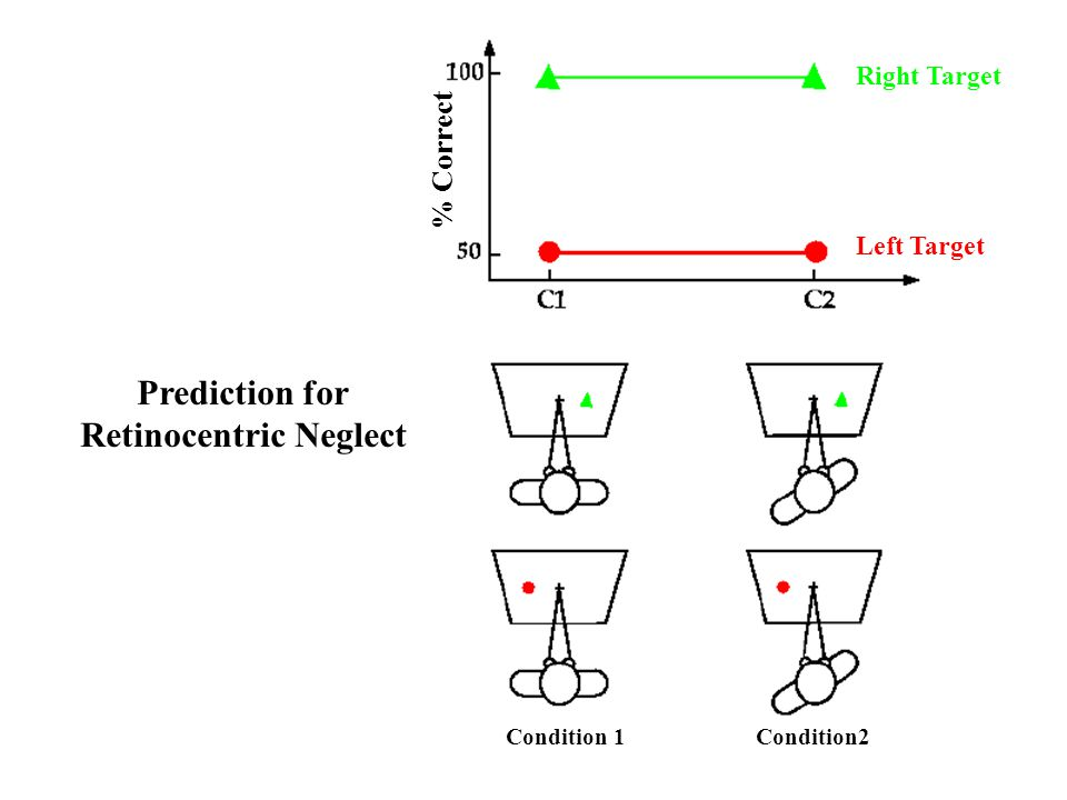 Prediction for Retinocentric Neglect Condition 1 Condition2 Right Target Left Target % Correct