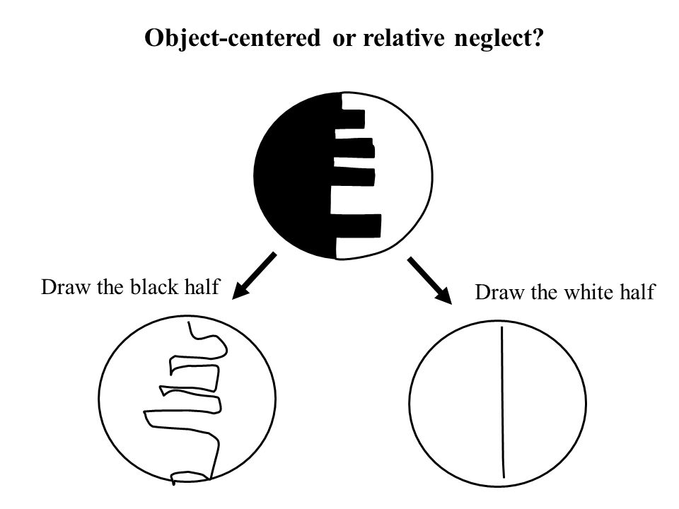 Draw the black half Draw the white half Object-centered or relative neglect?