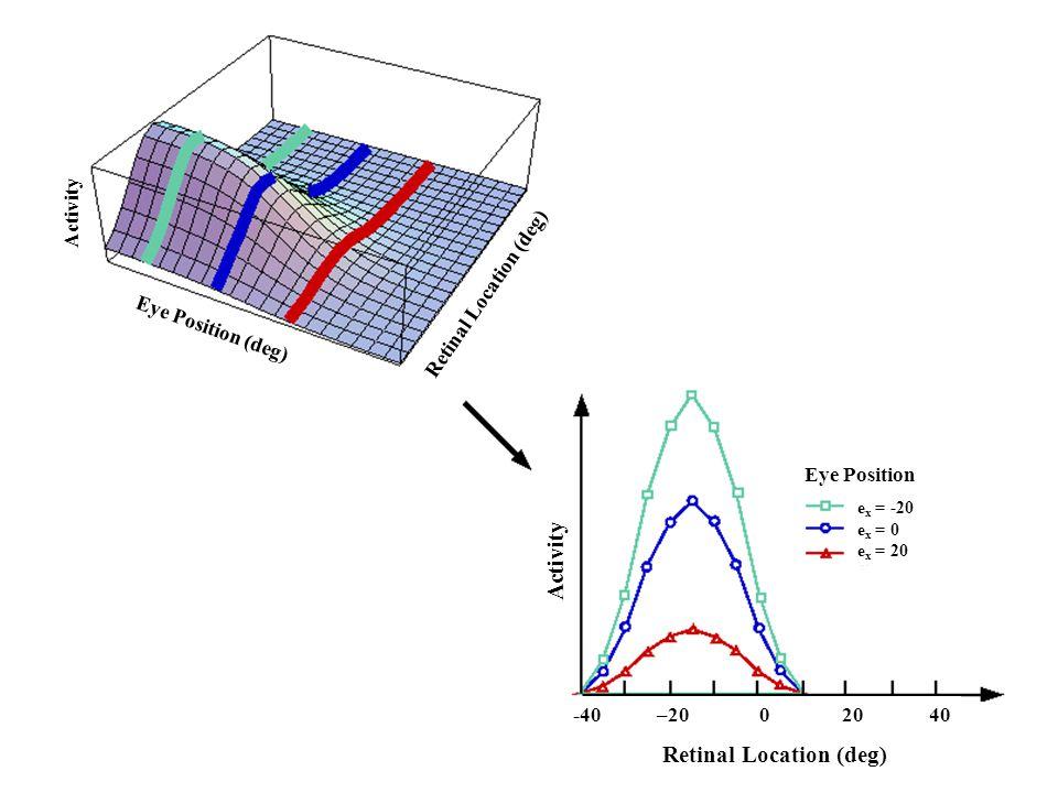 Retinal Location (deg) Activity Eye Position e x = -20 e x = 0 e x = 20 Retinal Location (deg) Activity Eye Position (deg) -40 –20 0 20 40