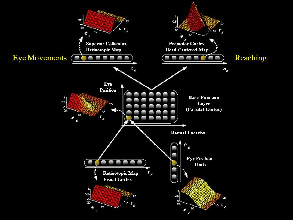 Eye MovementsReaching Basis Function Layer (Parietal Cortex) Retinal Location Eye Position Units Retinotopic Map Visual Cortex Eye Position Premotor Cortex Head-Centered Map Superior Colliculus Retinotopic Map