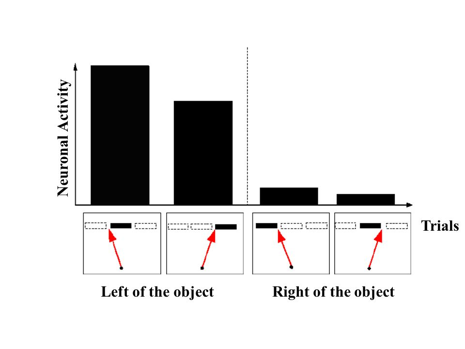 Left of the object Right of the object Neuronal Activity Trials