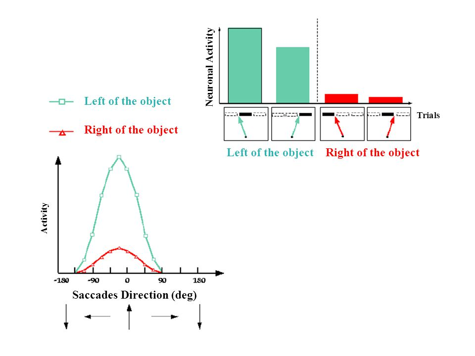 Left of the object Right of the object Left of the objectRight of the object Saccades Direction (deg) Neuronal Activity Activity Trials