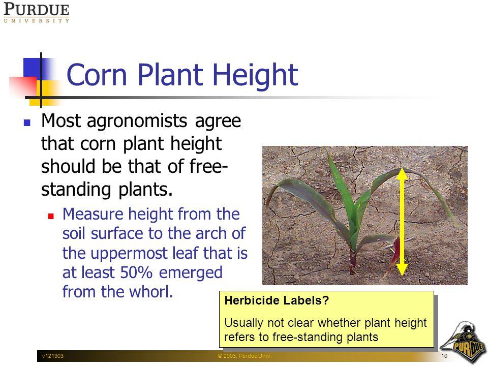 © 2003, Purdue Univ.10v121903 Corn Plant Height Most agronomists agree that corn plant height should be that of free- standing plants.