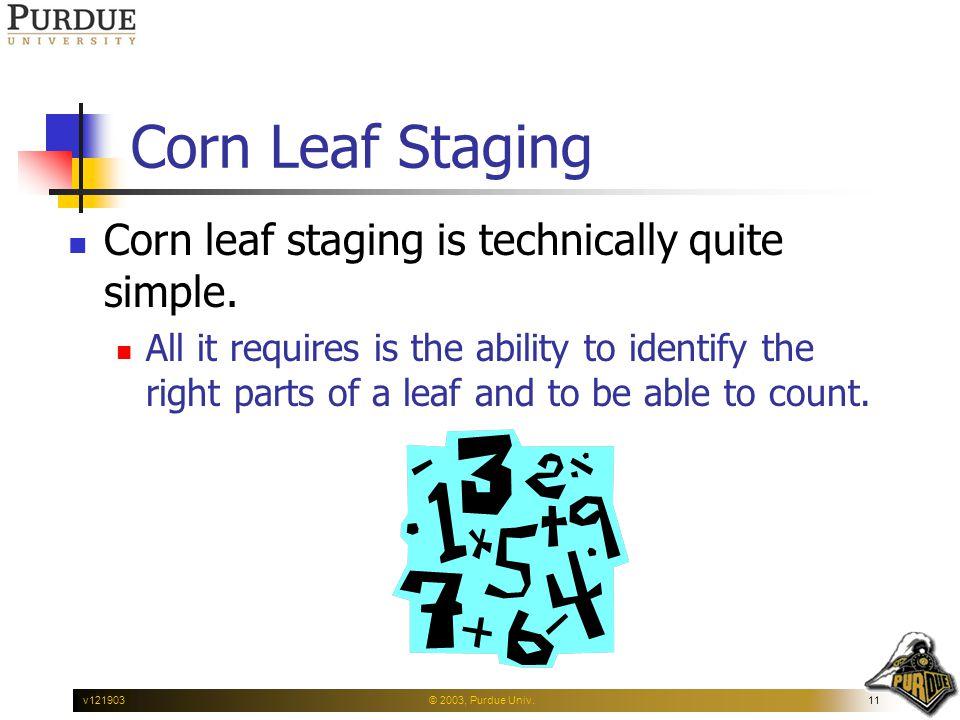 © 2003, Purdue Univ.11v121903 Corn Leaf Staging Corn leaf staging is technically quite simple.