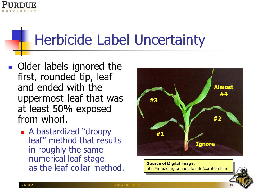 © 2003, Purdue Univ.16v121903 Herbicide Label Uncertainty Older labels ignored the first, rounded tip, leaf and ended with the uppermost leaf that was