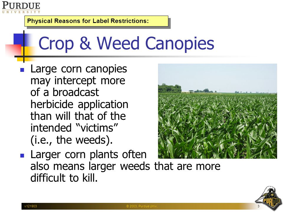 © 2003, Purdue Univ.3v121903 Crop & Weed Canopies Large corn canopies may intercept more of a broadcast herbicide application than will that of the in