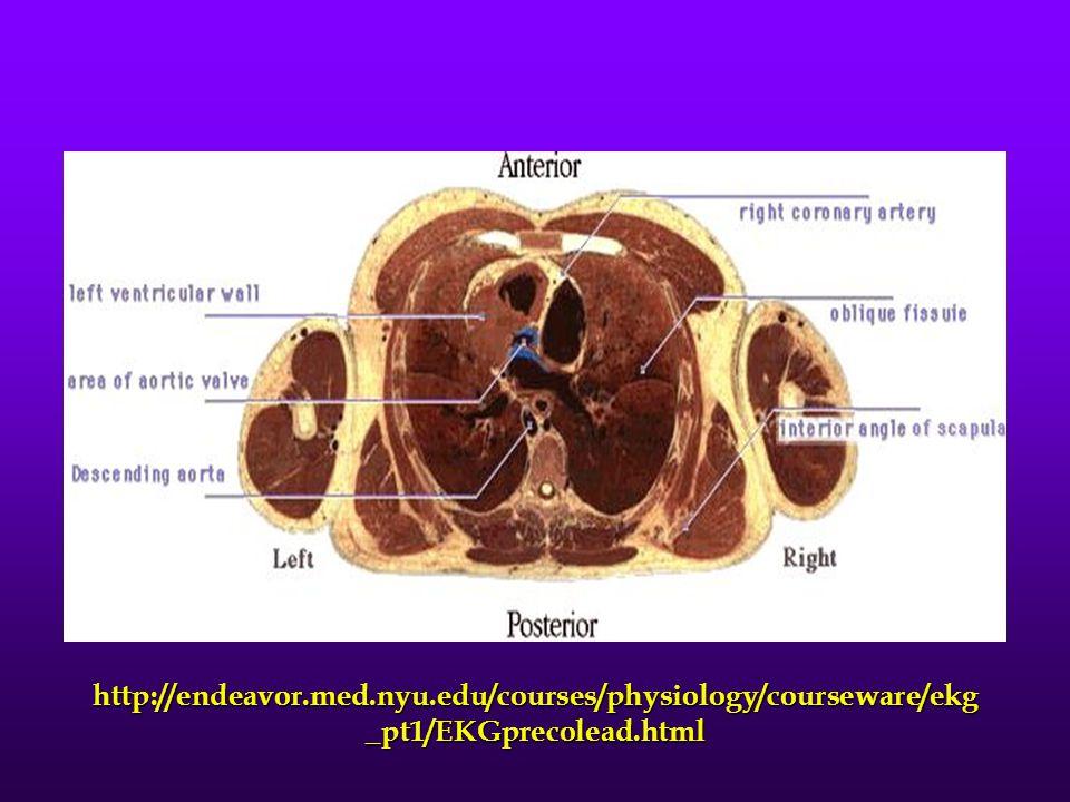 http://endeavor.med.nyu.edu/courses/physiology/courseware/ekg _pt1/EKGprecolead.html