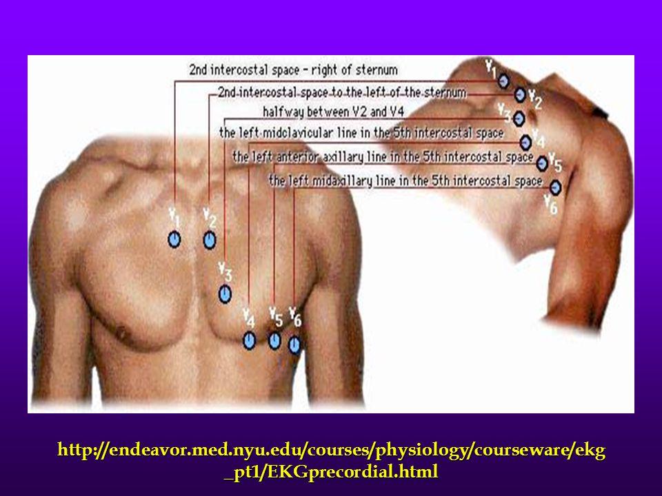 http://endeavor.med.nyu.edu/courses/physiology/courseware/ekg _pt1/EKGprecordial.html