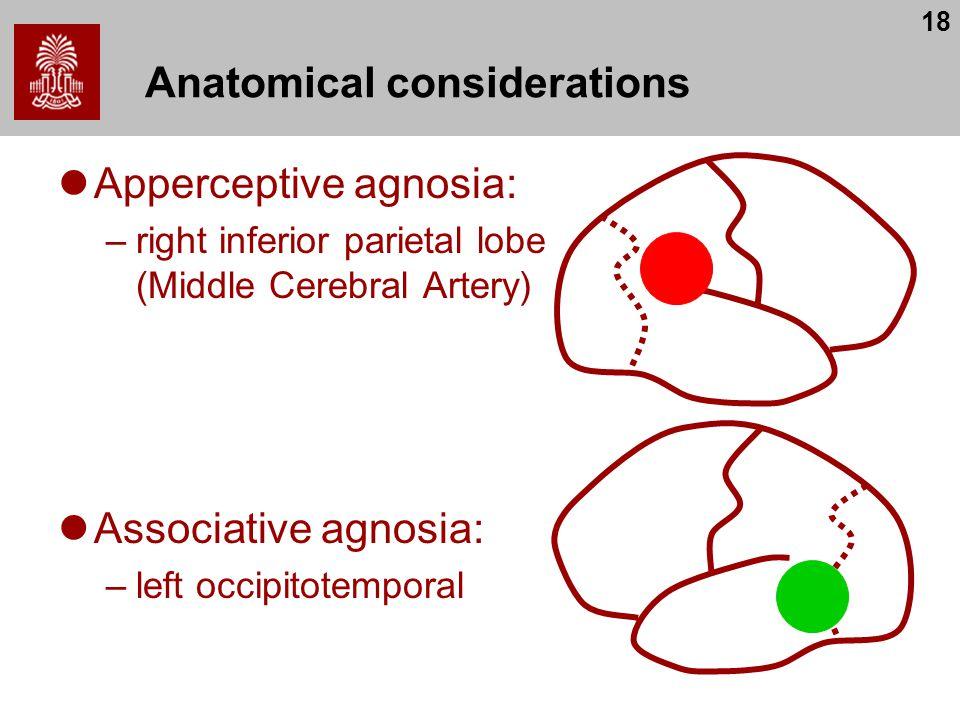 18 Anatomical considerations Apperceptive agnosia: –right inferior parietal lobe (Middle Cerebral Artery) Associative agnosia: –left occipitotemporal