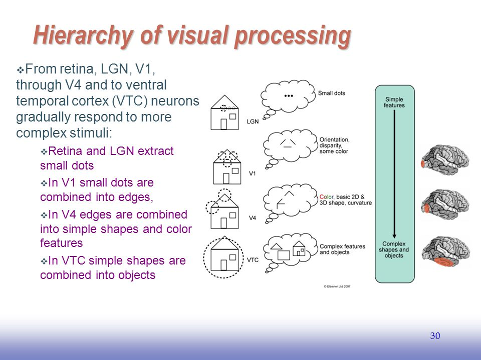 EE141 29 Area V1: The Primary Visual Cortex  V1 is made up of 6 layers (no relation to 6 layers in LGN).  LGN sends axons to layer IV of V1.  M and