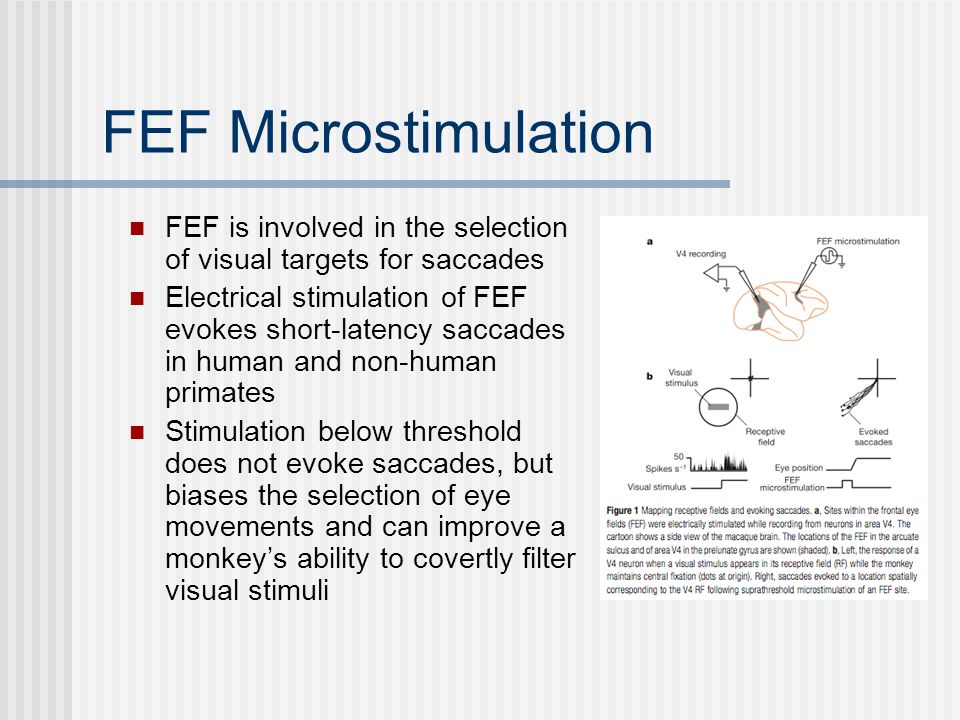 FEF Microstimulation FEF is involved in the selection of visual targets for saccades Electrical stimulation of FEF evokes short-latency saccades in human and non-human primates Stimulation below threshold does not evoke saccades, but biases the selection of eye movements and can improve a monkey's ability to covertly filter visual stimuli