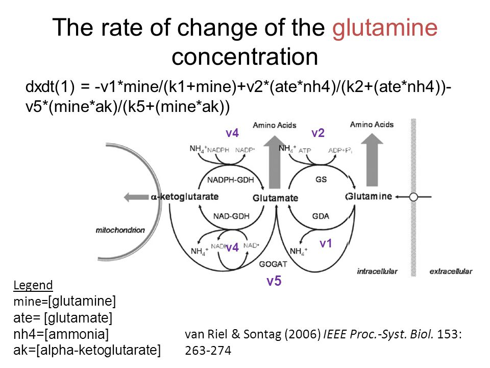 The rate of change of the glutamine concentration dxdt(1) = -v1*mine/(k1+mine)+v2*(ate*nh4)/(k2+(ate*nh4))- v5*(mine*ak)/(k5+(mine*ak)) Legend mine= [glutamine] ate= [glutamate] nh4=[ammonia] ak=[alpha-ketoglutarate] van Riel & Sontag (2006) IEEE Proc.-Syst.
