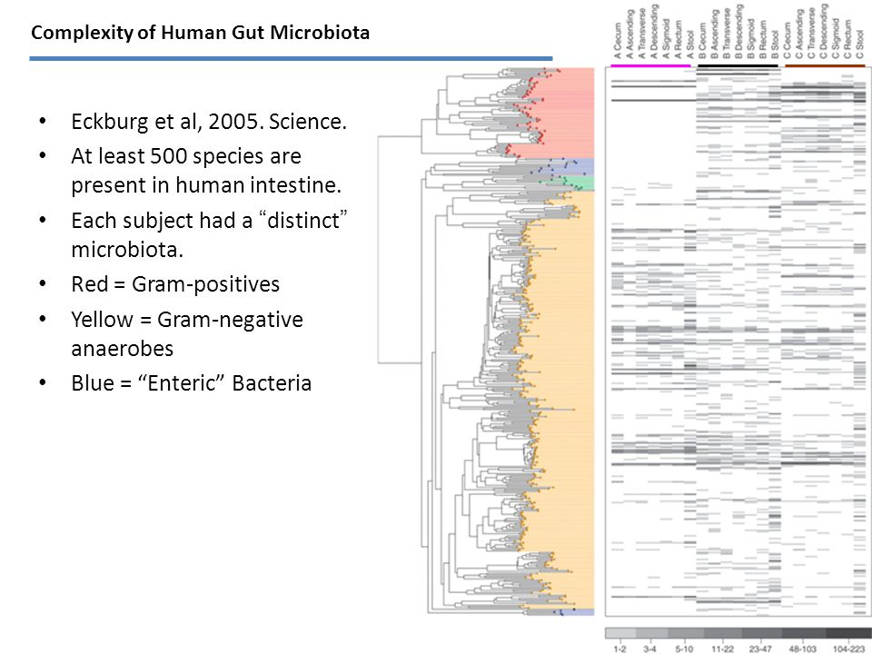 Eckburg et al, 2005. Science. At least 500 species are present in human intestine.