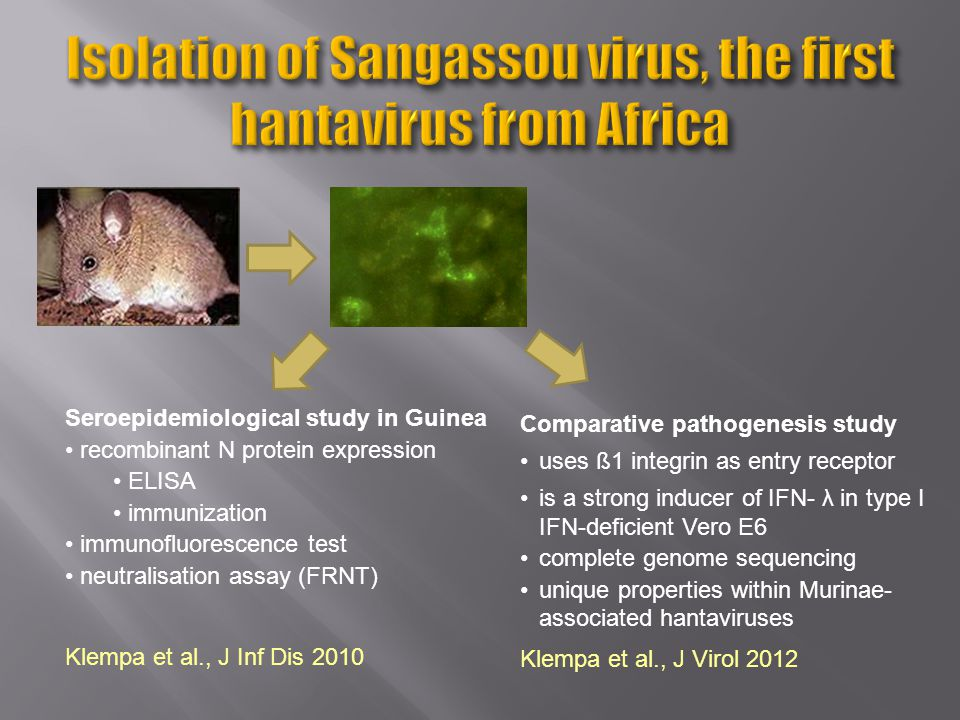Klempa et al., J Inf Dis 2010 Seroepidemiological study in Guinea recombinant N protein expression ELISA immunization immunofluorescence test neutralisation assay (FRNT) Klempa et al., J Virol 2012 Comparative pathogenesis study uses ß1 integrin as entry receptor is a strong inducer of IFN- λ in type I IFN-deficient Vero E6 complete genome sequencing unique properties within Murinae- associated hantaviruses