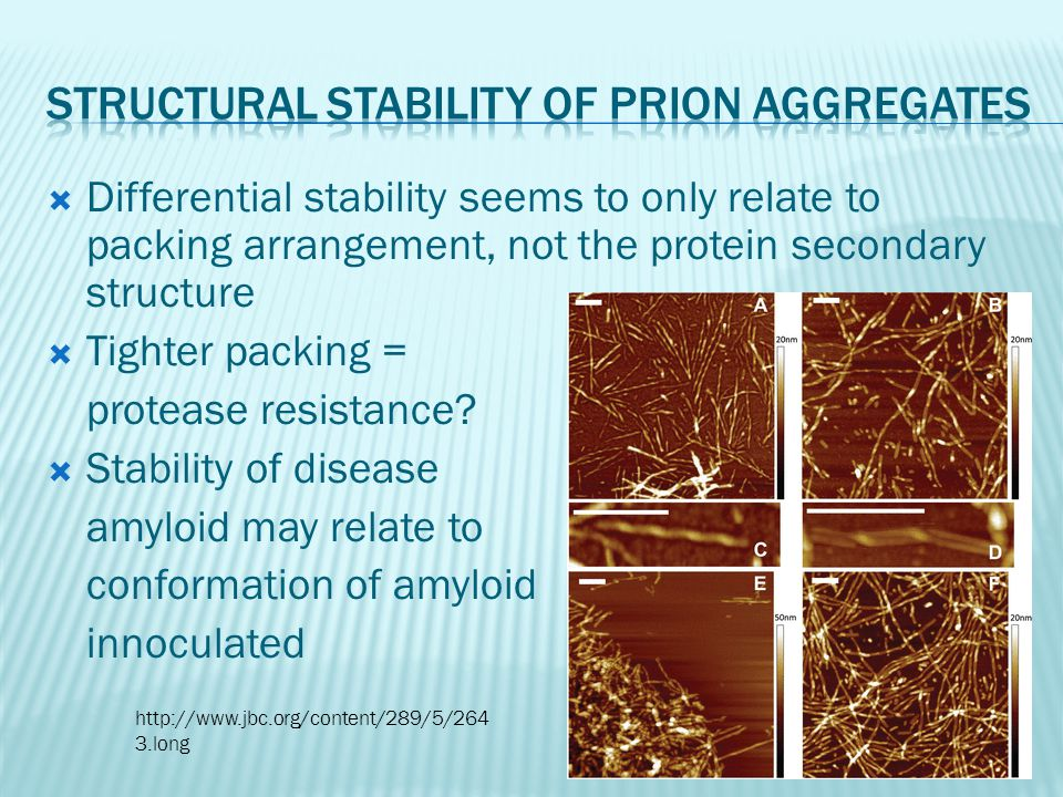  Differential stability seems to only relate to packing arrangement, not the protein secondary structure  Tighter packing = protease resistance?  S