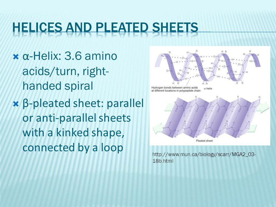  α- Helix: 3.6 amino acids/turn, right- handed spiral  β-pleated sheet: parallel or anti-parallel sheets with a kinked shape, connected by a loop http://www.mun.ca/biology/scarr/MGA2_03- 18b.html