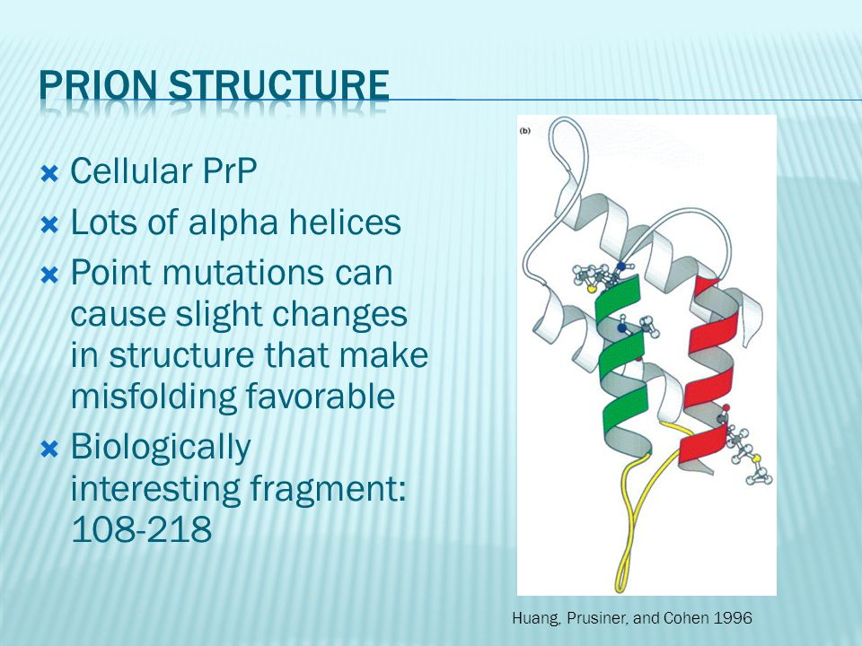  Amyloid analogue synthesized: KFFEAAAKKFFE  Aromatic pi-pi stacking (phenylalanine)  Charge attraction  Β-sheet interactions similar to silk http://www.pearsonhighered.co m/mathews/ch06/fi6p12.htm http://www.pnas.org/content/102/2/315.full