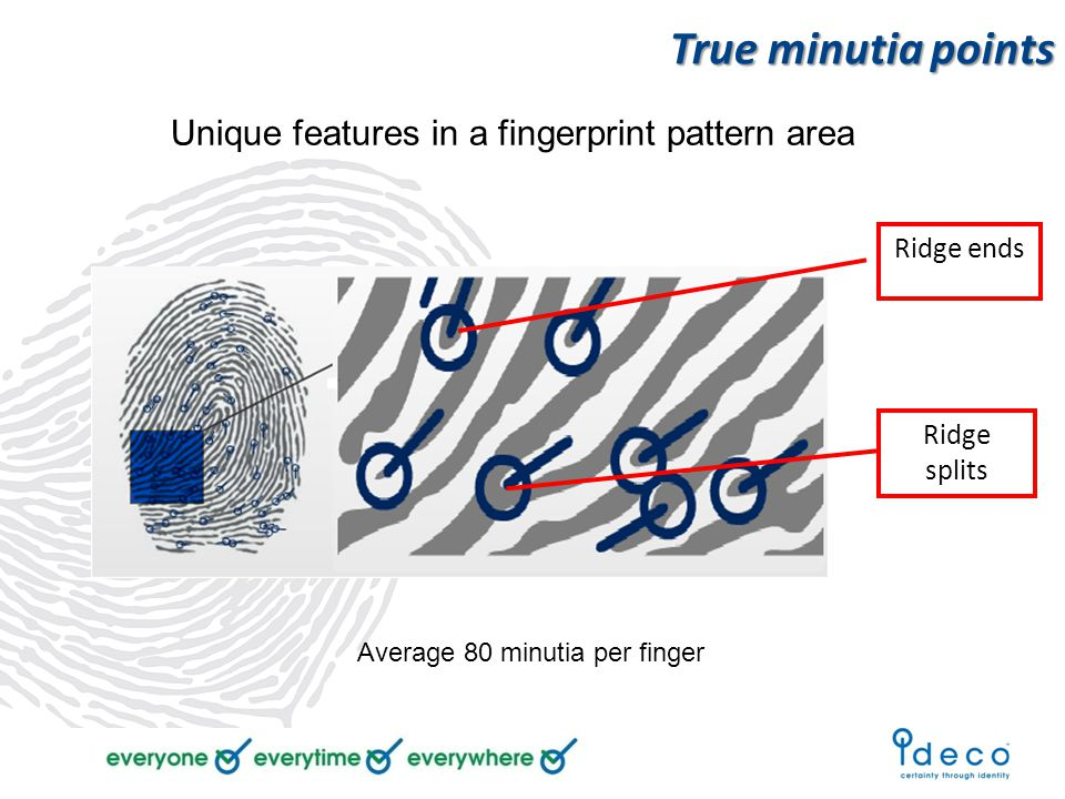 Unique features in a fingerprint pattern area True minutia points Ridge ends Ridge splits Average 80 minutia per finger