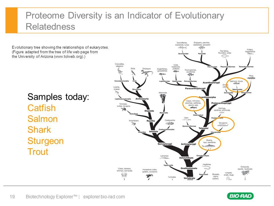Biotechnology Explorer™ | explorer.bio-rad.com 19 Proteome Diversity is an Indicator of Evolutionary Relatedness Evolutionary tree showing the relatio