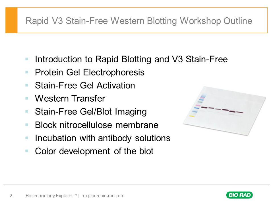 Biotechnology Explorer™ | explorer.bio-rad.com 2 Rapid V3 Stain-Free Western Blotting Workshop Outline  Introduction to Rapid Blotting and V3 Stain-F