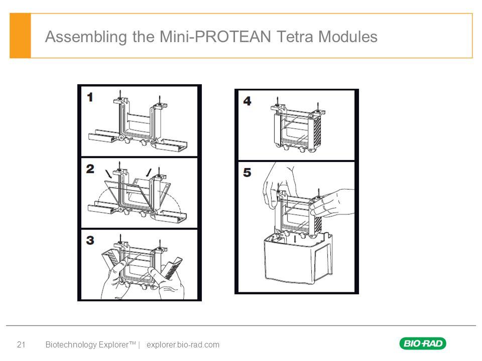 Biotechnology Explorer™ | explorer.bio-rad.com 21 Assembling the Mini-PROTEAN Tetra Modules