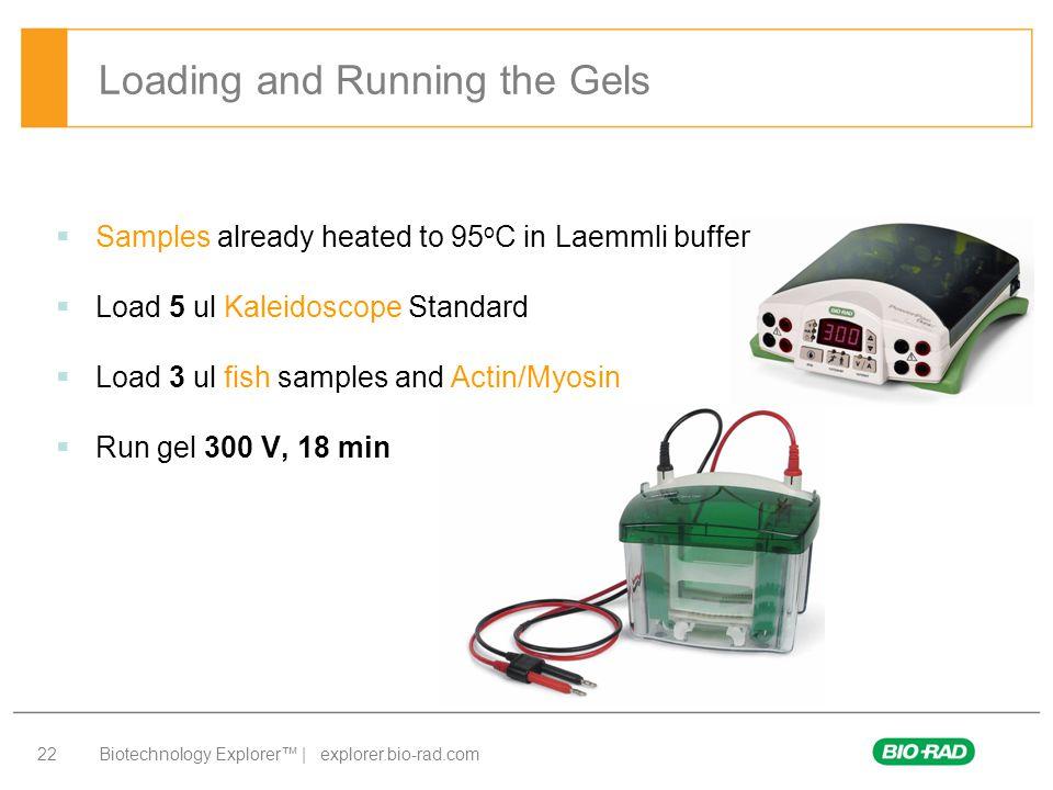 Biotechnology Explorer™ | explorer.bio-rad.com 22 Loading and Running the Gels  Samples already heated to 95 o C in Laemmli buffer  Load 5 ul Kaleid