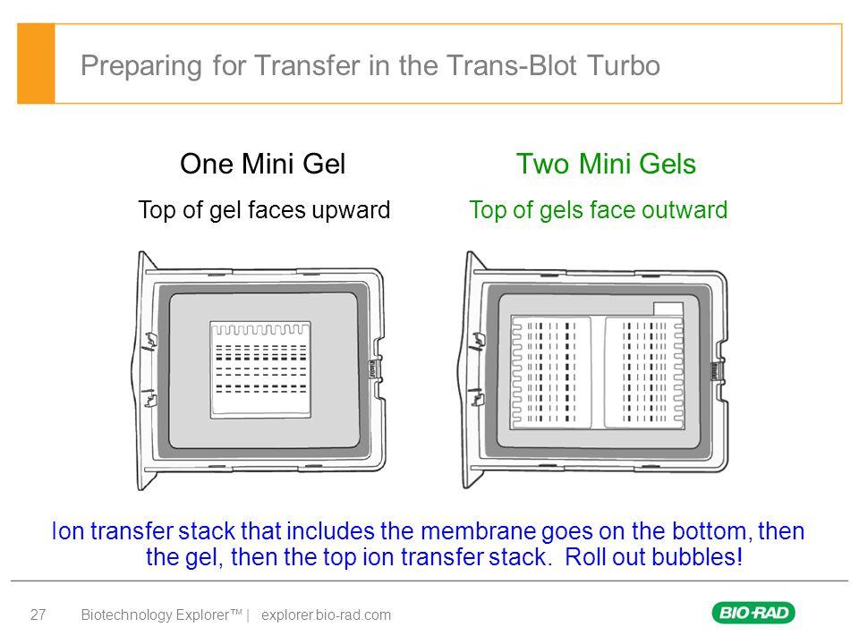 Biotechnology Explorer™ | explorer.bio-rad.com 27 Preparing for Transfer in the Trans-Blot Turbo One Mini Gel Two Mini Gels Ion transfer stack that in