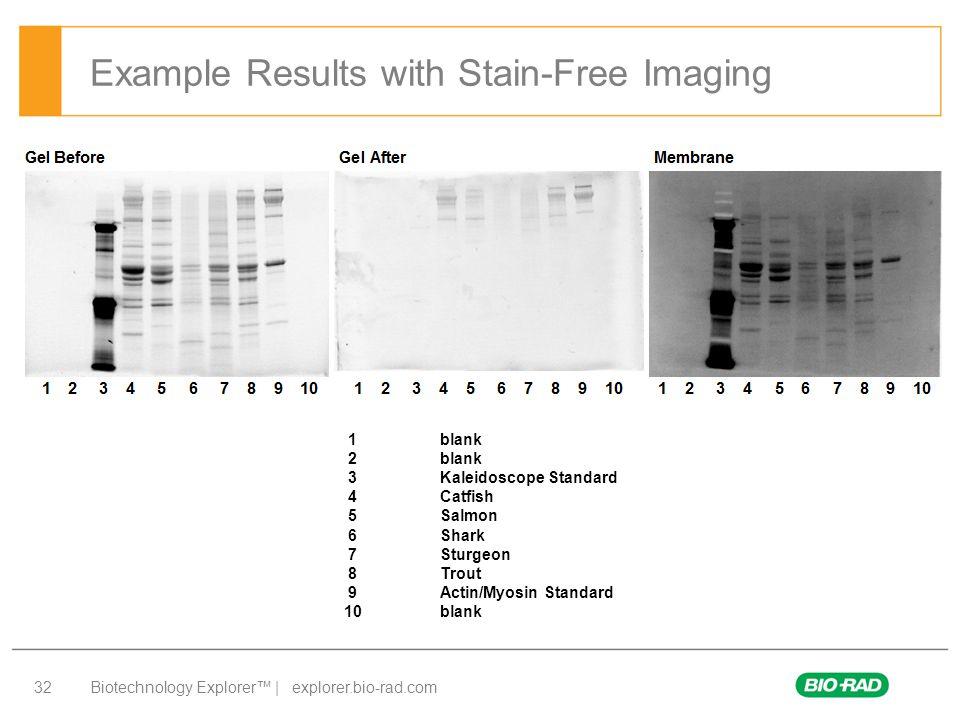 Biotechnology Explorer™ | explorer.bio-rad.com 32 Example Results with Stain-Free Imaging 1blank 2blank 3Kaleidoscope Standard 4Catfish 5Salmon 6Shark