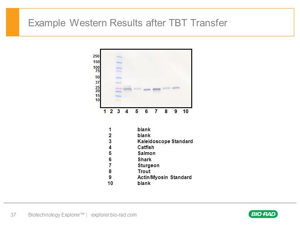 Biotechnology Explorer™ | explorer.bio-rad.com 37 Example Western Results after TBT Transfer 1blank 2blank 3Kaleidoscope Standard 4Catfish 5Salmon 6Sh