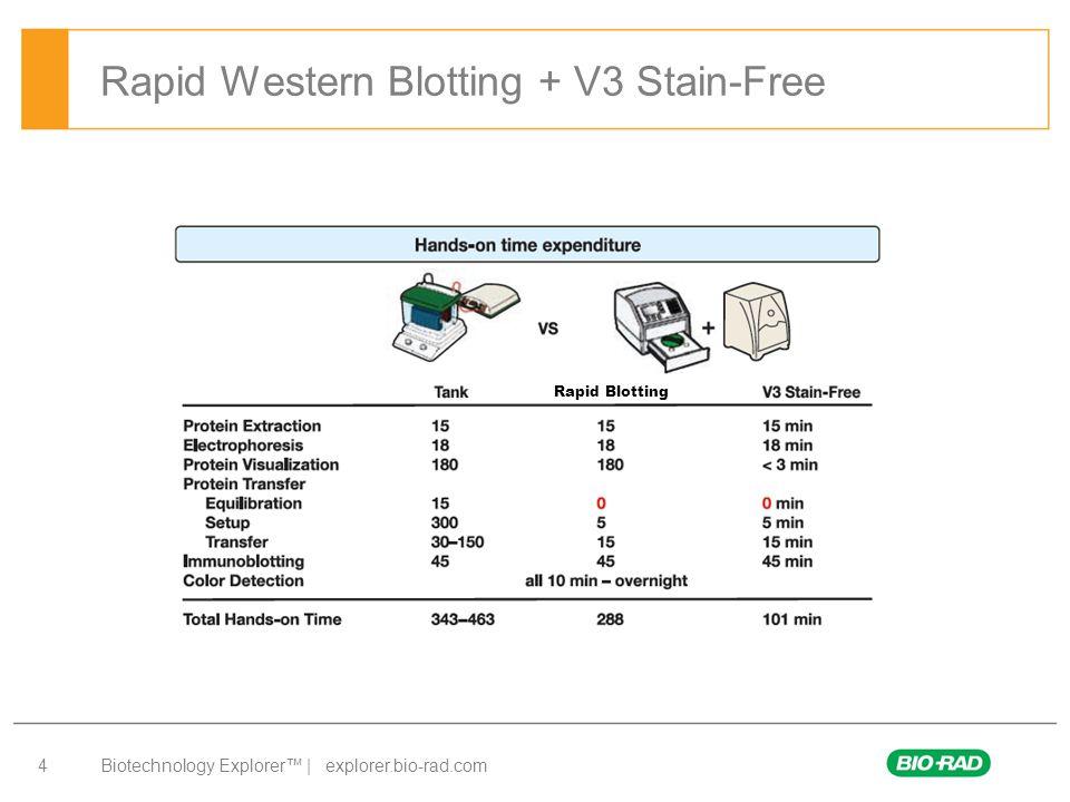 Biotechnology Explorer™ | explorer.bio-rad.com 4 Rapid Western Blotting + V3 Stain-Free Rapid Blotting