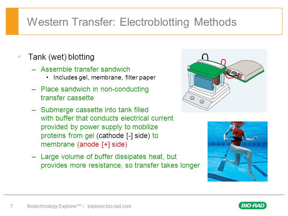 Biotechnology Explorer™ | explorer.bio-rad.com 7 Western Transfer: Electroblotting Methods  Tank (wet) blotting –Assemble transfer sandwich Includes