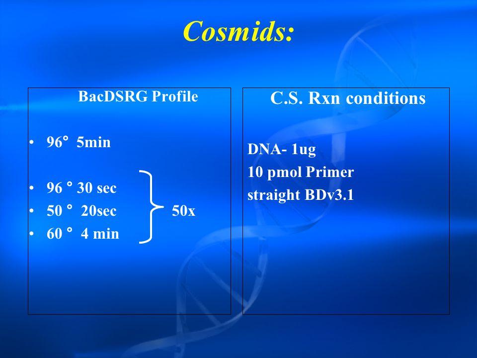 Cosmids: BacDSRG Profile 96°5min 96 ° 30 sec 50 ° 20sec50x 60 ° 4 min C.S.