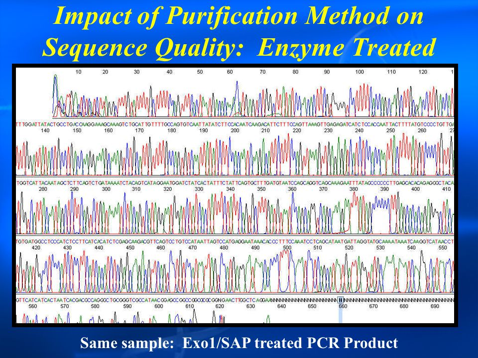Impact of Purification Method on Sequence Quality: Enzyme Treated Same sample: Exo1/SAP treated PCR Product