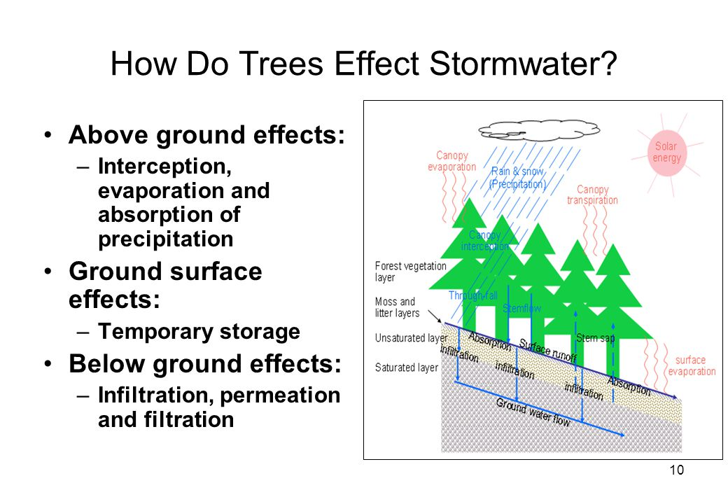 10 How Do Trees Effect Stormwater.