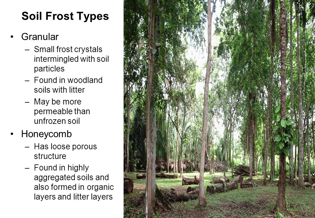 24 Soil Frost Types Granular –Small frost crystals intermingled with soil particles –Found in woodland soils with litter –May be more permeable than unfrozen soil Honeycomb –Has loose porous structure –Found in highly aggregated soils and also formed in organic layers and litter layers