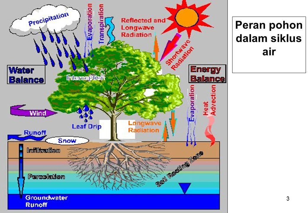 3 Peran pohon dalam siklus air