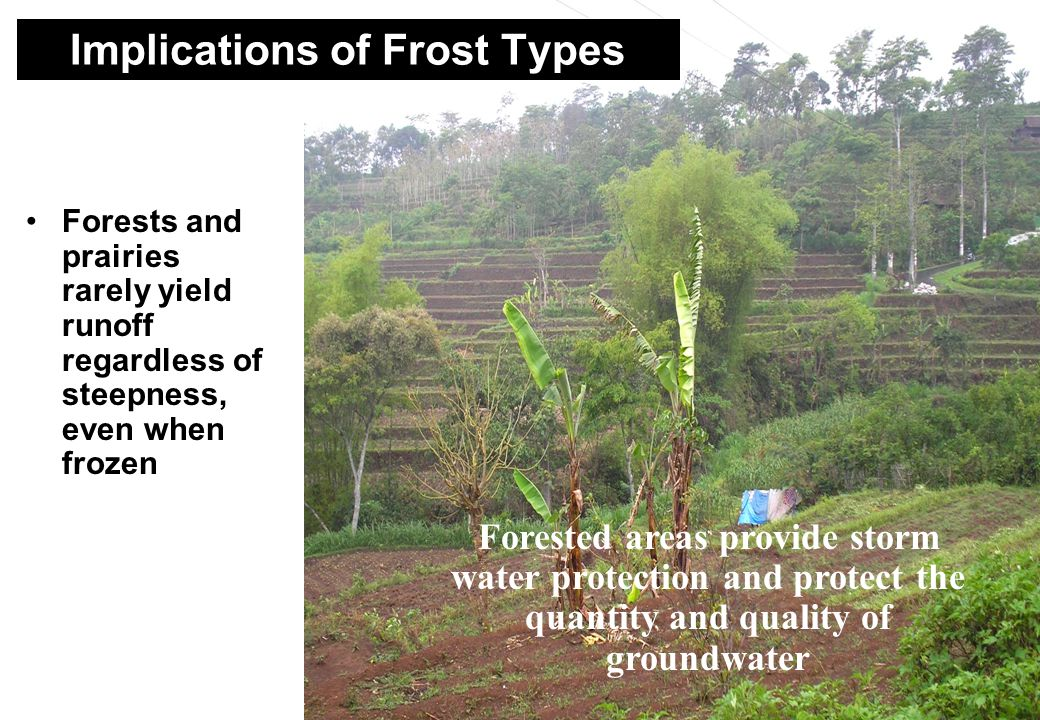39 Forests and prairies rarely yield runoff regardless of steepness, even when frozen Forested areas provide storm water protection and protect the quantity and quality of groundwater Implications of Frost Types