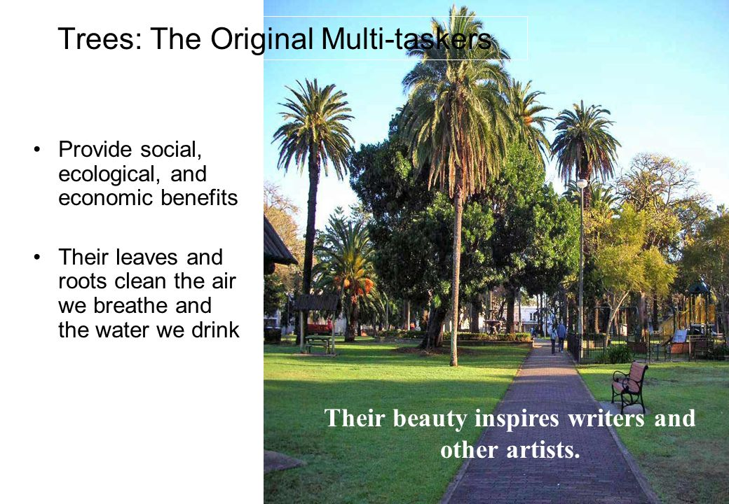 4 Provide social, ecological, and economic benefits Their leaves and roots clean the air we breathe and the water we drink Trees: The Original Multi-taskers Their beauty inspires writers and other artists.