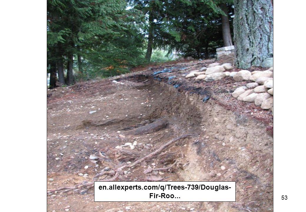 53 en.allexperts.com/q/Trees-739/Douglas- Fir-Roo...